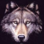 Profilový obrázok používateľa: trobo